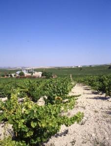 Finca La Cañada - Lagar y Viñedo - PÉREZ BARQUERO